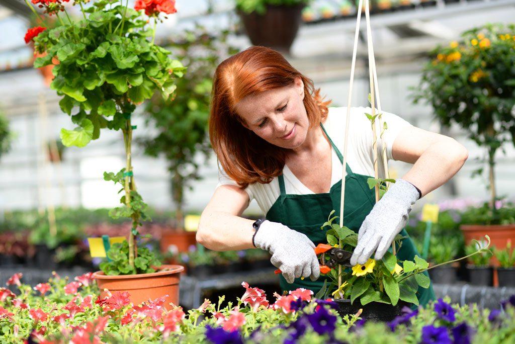 Examine the plant carefully
